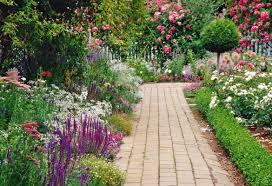 garden flowers. Garden Flowers C