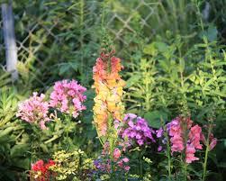 design a garden for flowers all summer great plant list the old farmer s almanac