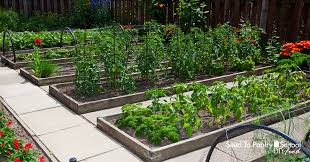 how to build and maintain raised beds