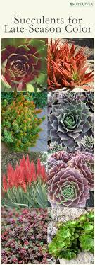 best images about gardening my favorite pastime 17 best images about gardening my favorite pastime shade garden shrubs and shade plants