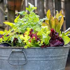 5 best container vegetables for