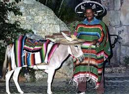 Image result for poncho on a donkey