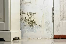 how can i get rid of mould permanently