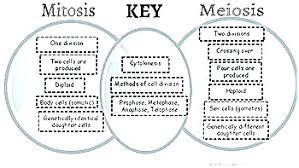 Comparing Mitosis And Meiosis Venn Diagram Venn Diagram Mitosis Wiring Diagram