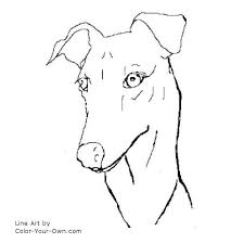 Small Picture Greyhound Headstudy Coloring Page
