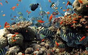 Live Fish Aquarium Wallpaper 39 Download 4k Wallpapers For Free