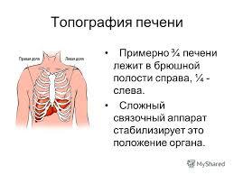 Значение печени кратко Биология Реферат доклад сообщение  Как работает сердце познавательный мультфильм