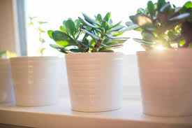 Feng shui home elements plants Direction Flower Pots With Plants And Flowers On Window Source The Feng Shui Better Homes And Gardens Real Estate How To Find And Use The Feng Shui Money Corner Lovetoknow