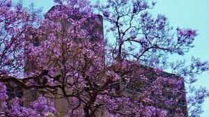 """Résultat de recherche d'images pour """"arbre en fleur"""""""