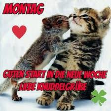Lustige Bilder Mit Sprüchen Guten Morgen Bilder Kostenlos Downloaden