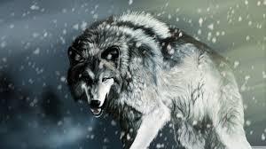 Wolf Ultra Hd Desktop Background Wallpaper For 4k Uhd Tv