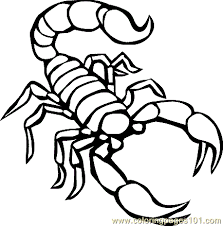 Small Picture Reptile Coloring Page 05 Coloring Page Free Scorpion Coloring
