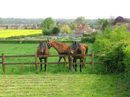 Great Chart Kent England File Horses In A Paddock At Great Chart Kent England Jpg