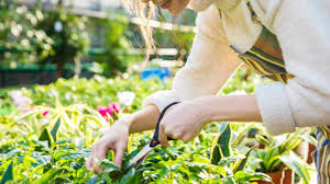 feature woman gardening gardening tips and tricks you can use right now