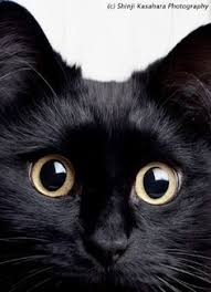 cute black cats with yellow eyes. Perfect Cute Cute Black Cat Shio Neko Theo Pic Cute Black Cats Kitty Cats With Yellow Eyes Pinterest