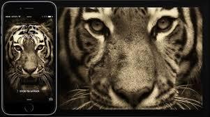 tiger iphone 6 wallpaper. Modren Iphone Tiger IPhone 6 Wallpaper On Iphone E