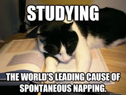 Studying The World's leading cause of spontaneous napping. - Cat ... via Relatably.com