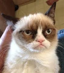 Mr angry cat - caption | Meme Generator via Relatably.com