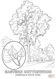 State Birds Coloring Pages New Coloring Pages Birds - creativemove.me