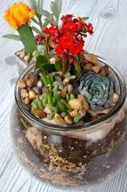 easy layered diy succulent cactus potted terrarium