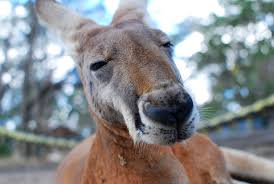 50 australian slang words terms and