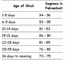 Chick Temperature Chart Parrotgirls Bird World Parrotgirls Bird World