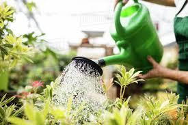Znalezione obrazy dla zapytania watering can