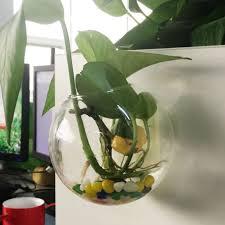 hanging plant flower terrarium glass ball vase bottle fish container terrarium