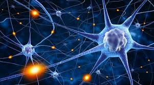 Image result for neuronen, bilder