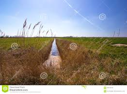 drainage ditch farmland drainage ditch between rural pasture fields stock image