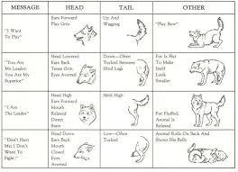 Wolf Body Language Chart Dog Wolf Body Language Wolf Love Wolf Stuff Wild Dogs
