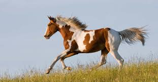 United In Light Draft Horse Sanctuary American Horse Breeds And Where To See Them In The Wild