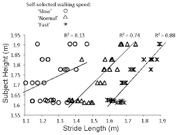 Stride Length Chart The Relationship Between Mean Stride Length And Height For