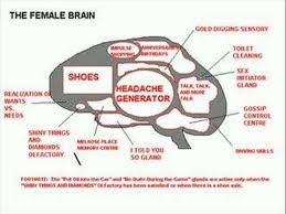 funny female brain vs male brain funny female brain vs male brain