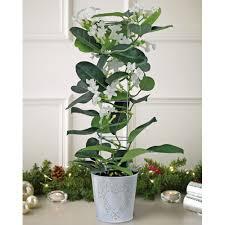 Last Minute Christmas Gift Airplants  Choosing HumanChristmas Gift Plants