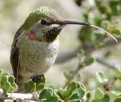 how to create a hummingbird garden in california
