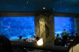 underwater restaurant disney world. The Prices Are Holiday Destination Pricey But There Some Cheaper Options Particularly For Those On A Disney Dining Plan. Underwater Restaurant World E