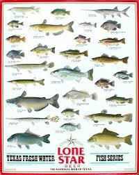 Texas Fish Chart Freshwater Fish Of Texas Freshwater Fishes Of Texas 2017