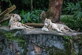 singapore zoo admission marriott