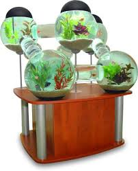 betta fish tanks. Modren Tanks Bubble Fish Tanks How Creative Inside Betta Fish Tanks T