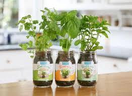 indoor gardening. Back To The Roots Garden In A Jar Indoor Gardening Kit Herb Growing Grow Herbs R