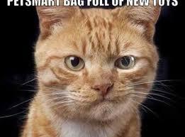 「awkward cat」の画像検索結果