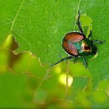 garden pest. Garden Pest Control A