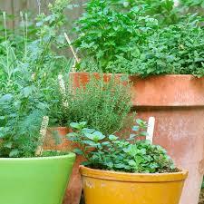 apartment herb garden. Fine Garden Apartment Herb Garden Tips Throughout Apartment Herb Garden N