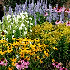 Small Picture High Country Gardens Pioneers in Sustainable Gardening