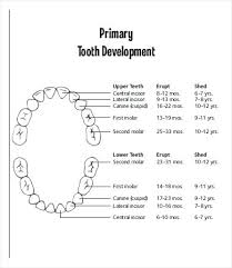 Teething Chart Babies Child Dentition Chart Arianet Co