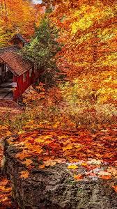Aesthetic Autumn Foliage Wallpaper ...