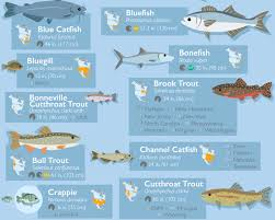 Nc Saltwater Fish Identification Chart 50 Fish Species Of North America The A To Z Of Local Fish