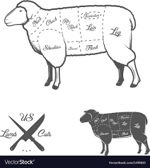 Cuts Of Lamb Chart American Cuts Of Lamb Or Mutton Diagram
