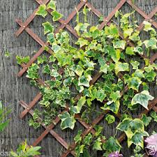 10 Fast Growing Flowering Vines  Best Wall Climbing Vines To PlantClimbing Plant Trellis
